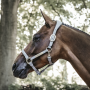 Kentucky Horsewear Lederhalfter Anatomic Wildleder - Grau